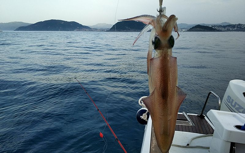 Squid or Cuttlefish Fishing San Sebastian